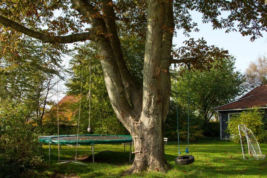 Det Gamle Kastanietræ
